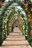 Turistas que caminan en el final de la manera hermosa del arco de flores del lirio en tiempo de primavera en el jardín de flores  fotos de archivo