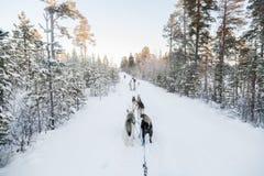 Turistas que ejecutan dogsled en Laponia Imágenes de archivo libres de regalías