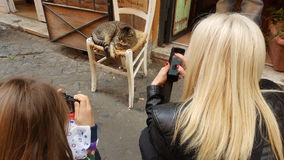 Turistas que fotografam um gato Fotografia de Stock