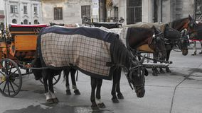 Turistas que llevan del caballo y del carro que visitan Viena Viena Wien es la ciudad capital y más grande de Austria, y una del  fotografía de archivo