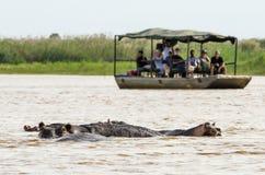 Turistas que miran hipopótamos Imagen de archivo libre de regalías