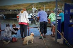 Turistas que miran y que alimentan los sellos en Eyemouth en Escocia 07 08 2015 Foto de archivo
