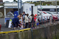 Turistas que miran y que alimentan los sellos en Eyemouth en Escocia 07 08 2015 Fotografía de archivo
