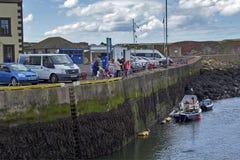 Turistas que miran y que alimentan los sellos en Eyemouth en Escocia 07 08 2015 Fotos de archivo