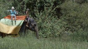 Turistas que montam em um elefante em Sri Lanka video estoque