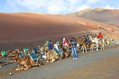 Turistas que montam nos camelos que são Fotografia de Stock