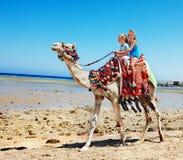 Turistas que montam o camelo na praia de Egito. Imagem de Stock Royalty Free