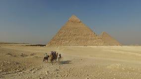 Turistas que montan camellos en las pirámides de Giza almacen de video