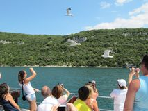 Turistas que navegam na balsa para alimentar gaivotas e tomar imagens Croácia, Istra - 20 de julho de 2010 imagem de stock