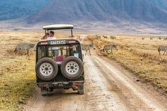Turistas que olham zebras na cratera de Ngorongoro, Tanzânia Fotos de Stock