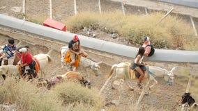 Turistas que sentam-se em asnos e que vão estrada acima cobbled, atração local, turismo vídeos de arquivo