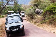 Turistas que sientan elefantes africanos foto de archivo