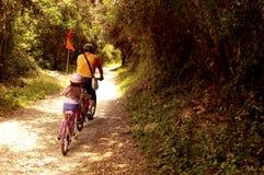 Turistas que van con los bycicles en itinerario turístico de Forest Park nacional imagen de archivo