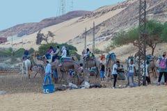 Turistas y dromedarios en la orilla del Nilo cerca de Jazirat Salujah foto de archivo