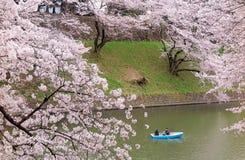Turistekor på en sjö under härliga träd för körsbärsröd blomning i Chidorigafuchi Urban parkerar under Sakura Festival i Tokyo Arkivbild