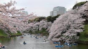 Turistekor på en sjö under härliga träd för körsbärsröd blomning i Chidorigafuchi Urban parkerar under Sakura Festival i Tokyo Arkivfoton