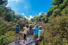 Turister birdwatching på Doi Inthanon, Chiang Mai arkivbilder