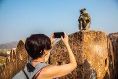 Turister fotograferar apalanguren Hon sitter på kanten av fästningväggen arkivbilder