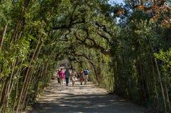 Turister går i parkeragränden, Boboli trädgårdar, Florence arkivbild