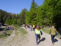 Turister grupperar med turnerar handboken i de Carpathian bergen ukraine Arkivfoton