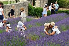 Turister i abbotskloster av Senanque, Provence, Frankrike Arkivbild