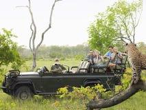 Turister i den Jeep Looking At Cheetah On journalen Royaltyfri Bild
