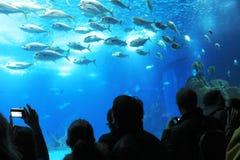 Turister i en fantastiska Oceanario i Lissabon, Portugal Royaltyfria Foton