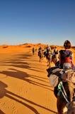 Turister i en kamelhusvagn Fotografering för Bildbyråer