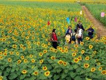 Turister i solrosfält arkivbild