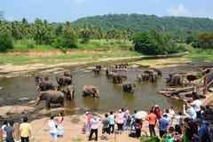 Turister observera elefanter bada i Maha Oya River Pinnawala elefantbarnhem Sri Lanka Royaltyfri Bild