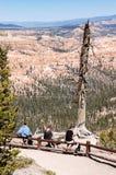 Turister och dött träd, Bryce Canyon, Utah Arkivfoto
