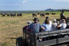 Turister ombord en safarijeepklocka en flock av lösa elefanter som betar i den Minneriya nationalparken i Sri Lanka Arkivfoton