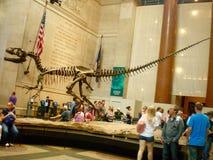 Turister på det amerikanska museet av naturhistoria Arkivfoton