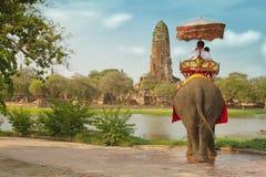 Turister på en elefantritt turnerar Fotografering för Bildbyråer