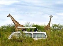 Turister på safaritake föreställer av giraff Arkivfoto