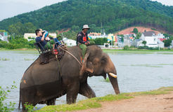 Turister rider en elefant på en sjö Royaltyfri Fotografi