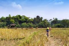 Turister som cyklar i Vang Vieng, Laos arkivbild