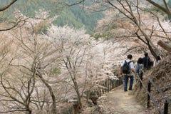 Turister som går på den Yoshino Mountain banan Royaltyfri Fotografi