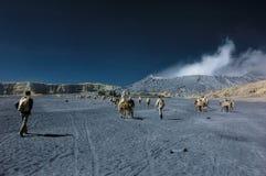 Turister som har gyckel på det Bromo berget Arkivfoto