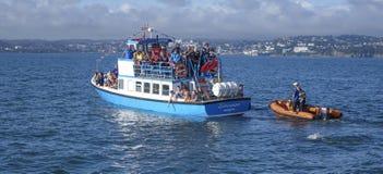 Turister som pekar på dolthins i Torbay Arkivbilder