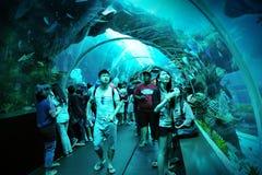 Turister som promenerar tunnelen i S.E.A. Aquarium Arkivbilder