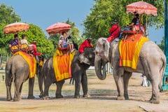 Turister som rider elefanter Ayutthaya bangkok Thailand royaltyfri bild