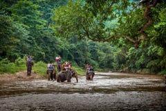 Turister som sitter på baksidorna av de stora elefanterna som korsar floden Royaltyfri Fotografi