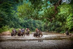 Turister som sitter på baksidorna av de stora elefanterna som korsar floden Arkivfoto