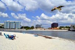 Turister som tycker om stranden på en solig dag med en pelikan som över flyger Fotografering för Bildbyråer