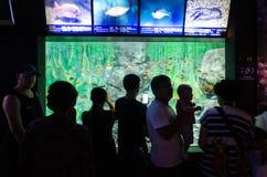Turister stoppar och observerar en behållare mycket av fisken i ett akvarium Arkivfoto