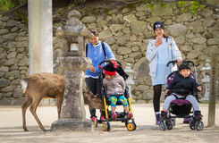 Turister tar bilden av Miyajimas hjortar Royaltyfri Bild