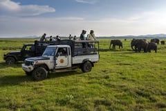 Turister tycker om att hålla ögonen på en flock av elefanter i Sri Lanka royaltyfria foton