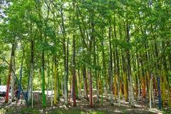 Turisterna kommer till den färgrika skogen eller Padureaen Colorata Poienari Gorj County, Rumänien - 19 05 2019 3 royaltyfria bilder
