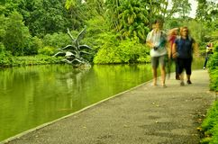 Turisti ai giardini botanici di Singapore Fotografia Stock Libera da Diritti
